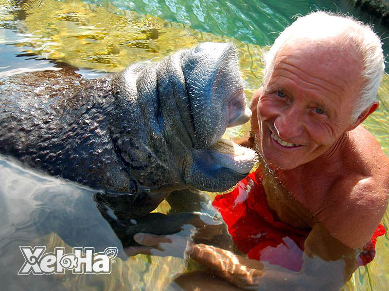 Manatee Encounter_4