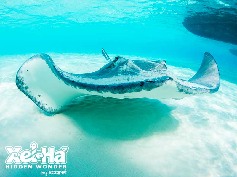 Stingray Encounter_1