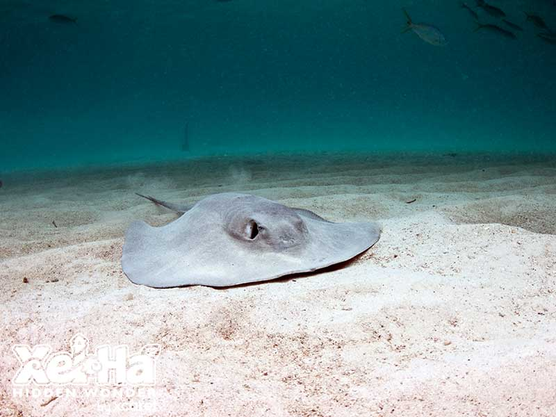 Stingray Encounter_3