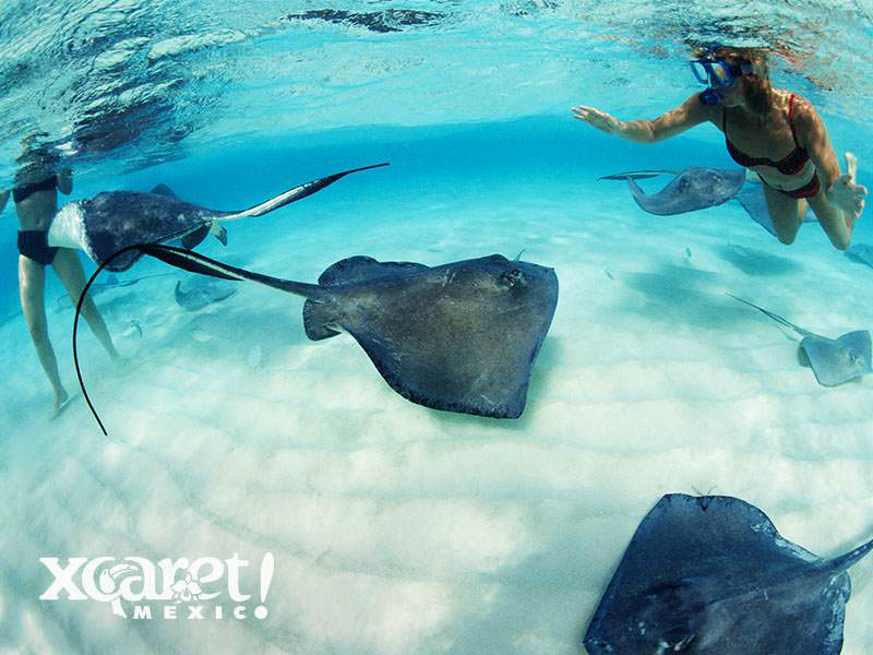 Swim With Stingrays2